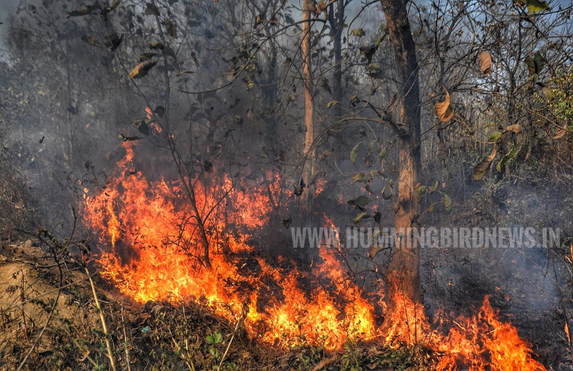 Bahadurpur forests burn for four hours due to wildfire