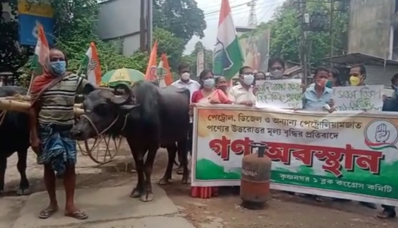 Congress holds protest demonstration with a buffalo cart against rising fuel prices in Krishnagar