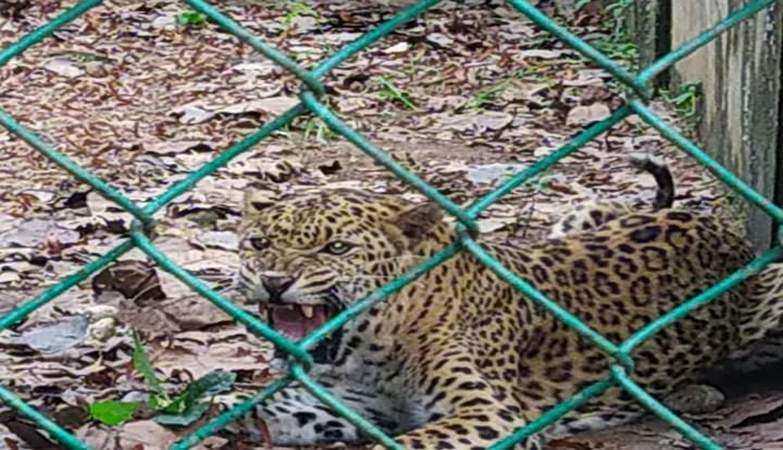 Panic after female cheetah escapes from enclosure in Jhargram Zoological Park